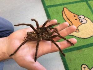 A tarantula onesie